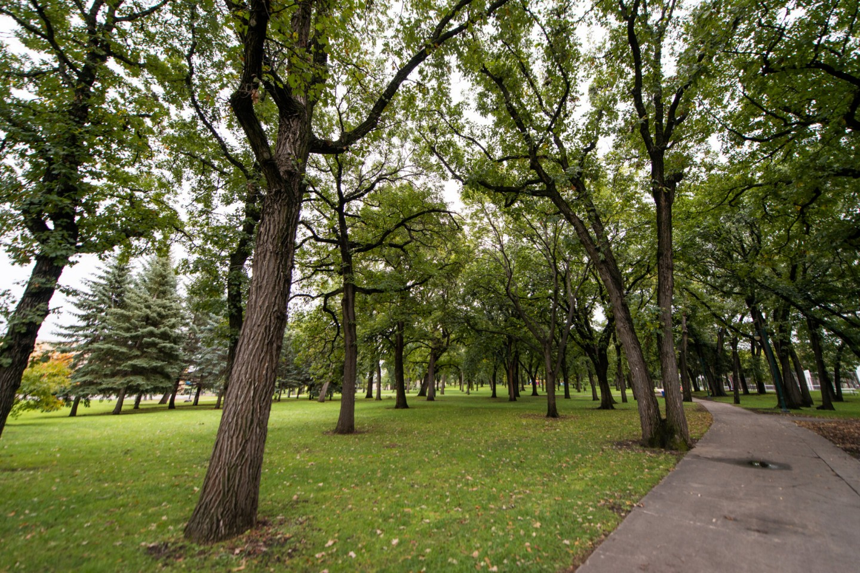 Island Park trees
