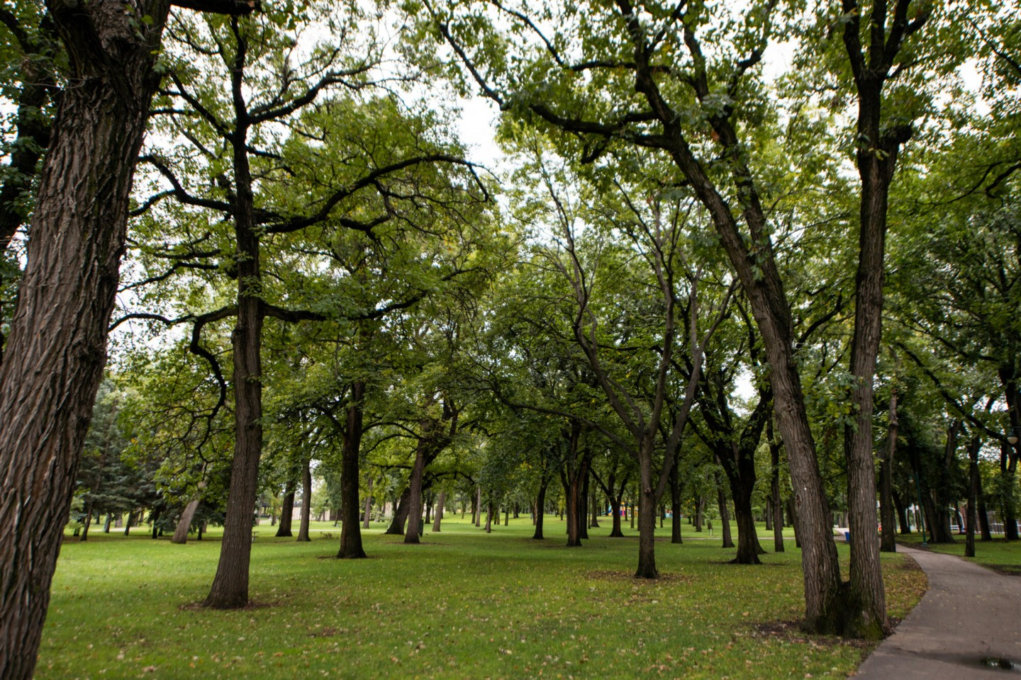 Trees at Island Park Fargo