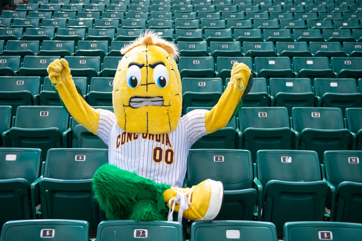 Kernel in stands at Newman Field